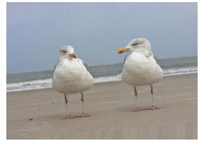 Zwei Möven am Strand